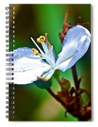 Tiny White Wildflower In Vicente Perez Rosales National Park Near Puerto Montt-chile  Spiral Notebook