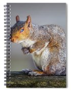 Tired Squirrel And Fly Spiral Notebook