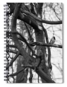 Tit Bird Perching On Tree Spiral Notebook