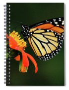 Tithonia Loving Monarch Spiral Notebook