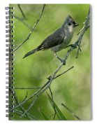 Titmouse In The Brush Spiral Notebook