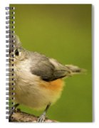 Titmouse Ready To Jump And Fly Spiral Notebook