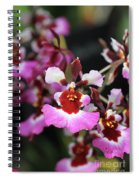 Tolumnia Pink Panther Orchid Spiral Notebook