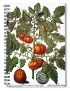 Tomato & Watermelon 1613 Spiral Notebook