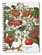 Tomato, 1613 Spiral Notebook