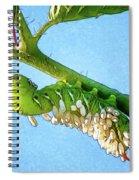 Tomato Hornworm Spiral Notebook