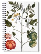 Tomato Plant, 1735 Spiral Notebook