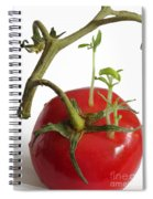 Tomato Seedlings Sprouting Spiral Notebook
