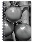 Tomatoes On The Vine Bw Spiral Notebook