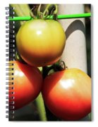 Tomatoes Ripening On The Vine Spiral Notebook