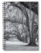 Tomotley Plantation Oaks Spiral Notebook