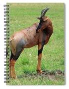 Topi Antelope - Masai Mara - Kenya Spiral Notebook