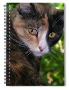 Tortie Spiral Notebook