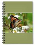 Tortoise Butterfly Spiral Notebook