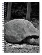 Tortoise Relaxing Spiral Notebook