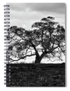 Tortue Oak Spiral Notebook