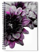 Touch Of Pink Mums Spiral Notebook