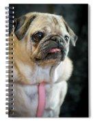 Toutou 13 Spiral Notebook