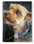 Toutou 17 Spiral Notebook