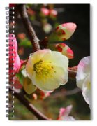 Toyo-nishiki Spiral Notebook