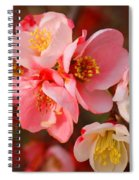 Toyo-nishiki Quince Blooms Spiral Notebook