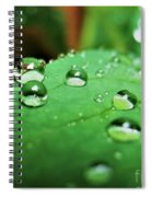 Traces Of Rain Spiral Notebook