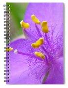 Tradescantia Andersoniana Spiral Notebook