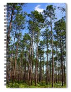 Trail Through The Pine Forest Spiral Notebook