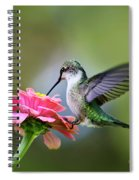 Tranquil Joy Hummingbird Square Spiral Notebook