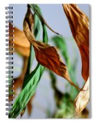 Transition Spiral Notebook
