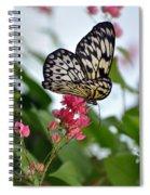 Translucent Butterfly Spiral Notebook