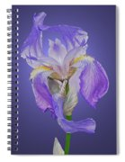 Translucent Iris Spiral Notebook