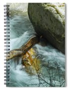 Trapped River Log Spiral Notebook