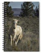 Traveler Spiral Notebook