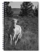 Traveler Bw Spiral Notebook