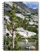 Treasure Lake Pine Spiral Notebook