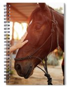 Treating From Depression With The Help Of A Horse Spiral Notebook