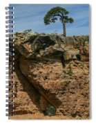 Tree And Window Spiral Notebook