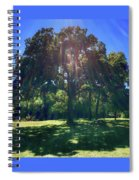 Tree Bathed In Sun Spiral Notebook