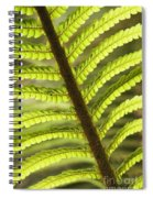 Tree Fern Frond Spiral Notebook