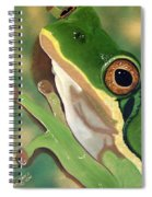 Tree Frog Eyes Spiral Notebook