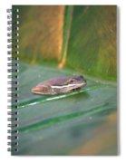 Tree Frog IIi Spiral Notebook