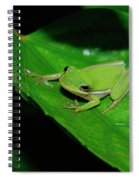 Tree Frog On Hibiscus Leaf Spiral Notebook