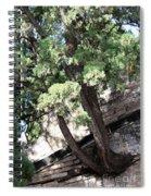 Tree Growing Through Wall Spiral Notebook