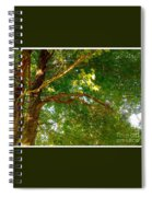 Tree In Late Summer Spiral Notebook