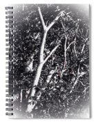 Tree In Summer In Black And White Spiral Notebook