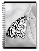 Tree Nymph - Light Spiral Notebook