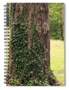 Tree Of Ivy Spiral Notebook