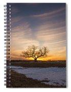Tree Of Light  Spiral Notebook
