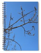 Tree Of New Life Spiral Notebook